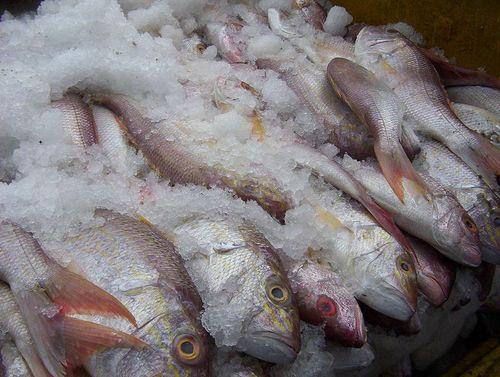 Рыба в морозилке