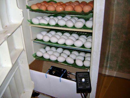 Инструкция как сделать инкубатор из холодильника